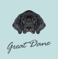 Vector Illustrated portrait of German Great Dane puppy.