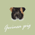 Vector Illustrated portrait of Guinea pig. Royalty Free Stock Photo