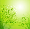 Vector illustration abstract spring tree background Royalty Free Stock Photography