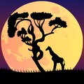 Vector illustration of an African landscape with wildlife on a night scene, full moon and night sky Royalty Free Stock Photo