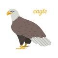 Vector illustration of american eagle