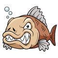 Vector illustration of angry fish cartoon Royalty Free Stock Photo