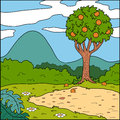 Vector illustration, background (glade and orange tree) Royalty Free Stock Photo