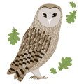 Vector Illustration of a Barn Owl Royalty Free Stock Photo