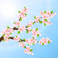 Vector illustration beautiful branches of sakura on a blue sky Stock Photography