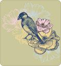 Vector illustration of birds and blooming roses. Stock Photography