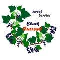 Vector illustration of black currant wreath