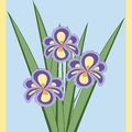 Vector illustration of bouquet of iris flowers.