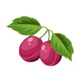 Vector illustration of bright, ripe plums. Cartoon icon. Royalty Free Stock Photo