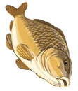 Vector illustration carp Stock Image