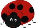Vector illustration of cartoon Lady bug