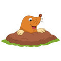 Vector Illustration Of Cartoon Mole