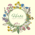 Vector illustration in circle shape. Herbs background, fresh leaves and different flowers. Frame with place for your