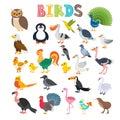 Vector illustration of different kind of birds. Cute cartoon bir Royalty Free Stock Photo
