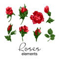 Vector illustration of different red roses elements
