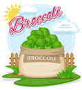 Vector illustration of eco products. Broccoli in burlap sack. Full sacks with fresh vegetables Royalty Free Stock Photo