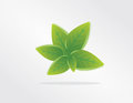 Vector illustration of ecology concept icon with glossy green leaves Stock Photo
