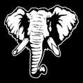 Vector illustration of an elephant`s head