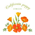 Vector illustration of flower arrangement. California poppy. Royalty Free Stock Photo