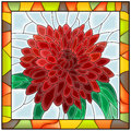 Vector illustration of flower chrysanthemum. Stock Photos