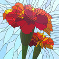 Vector illustration of flower red marigold. Stock Photography