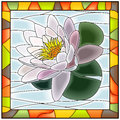 Vector illustration of flower white water lily. Royalty Free Stock Photo