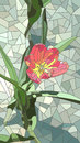 Vector illustration of flowers red tulip. Royalty Free Stock Photo