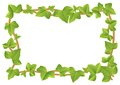 Vector illustration of a frame from ivy vines with leaves Stock Images