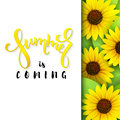 Vector illustration of hand lettering poster - summer is coming with paper sheet on a background of blooming sunflower