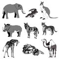 Vector illustration. Image rhino kangaroo, giraffe, elephant, zebra, snake, crocodile, camel, tiger. black and white.