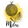 Vector illustration of a melon