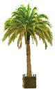 Vector illustration of the palm tree in pot Stock Photography