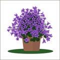 Vector illustration plant in pot.