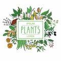 Vector illustration of plants