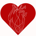 Vector illustration of realistic stylized heart in red heart.