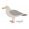 Vector illustration of seagull.