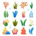 Nature seaweed marine