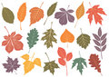 Vector illustration set of 19 autumn leaves. Royalty Free Stock Photos