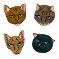 Vector illustration set of cats flat icons. Cartoon and realistic in brown, warm gray and sand colours isolated on white