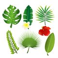 Vector illustration set of exotic tropical leaves and flowers. Colorful floral collection in flat cartoon style.
