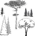 Vector illustration set of trees pine spruce fir apple Stock Photo