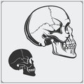 Vector illustration of skulls.