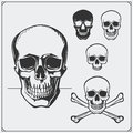 Vector illustration of Skulls and Jolly Roger.