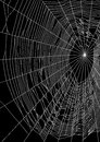 Vector illustration of spider web or cobweb on black background Royalty Free Stock Photo