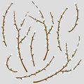 Vector illustration of spring willow patern