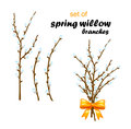 Vector illustration of spring willow on white background