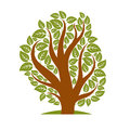 Vector illustration of stylized branchy tree isolated on white background ecology conservation theme image Royalty Free Stock Photography