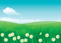Vector illustration of summer landscape with many flowers on green grass and blue sky with fluffy clouds Royalty Free Stock Image