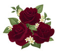 Vector illustration of three burgundy roses Stock Photo