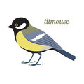 Vector illustration of titmouse.